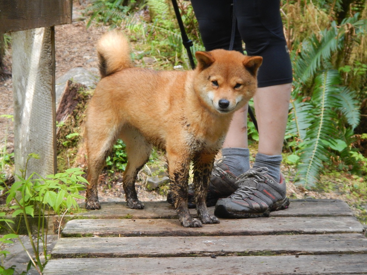 No mud puddle can stand in her way!